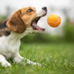 Spielzeug Tipps um Hunde zu beschäftigen > WissensMagazine.com